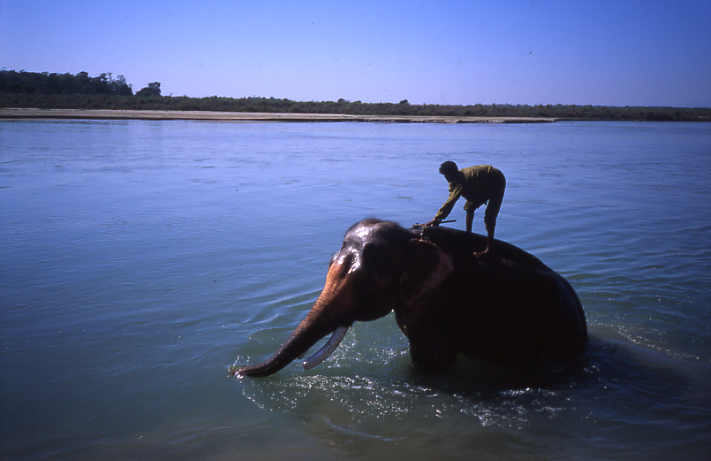 Elephant wash - Chitwan, Nepal