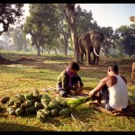 Elephant Food - Chitwan, Nepal