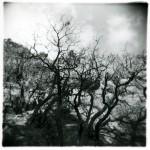 Mt. Eldon - Flagstaff, Arizona
