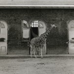 Giraffe House - Berlin, Germany