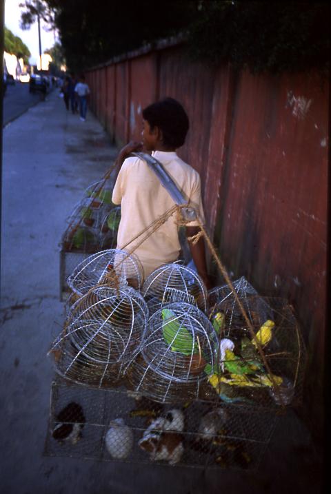Pets for Sale - Kathmandu, Nepal