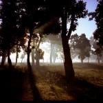Trees - Chitwan, Nepal